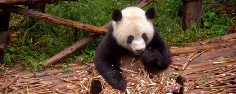 Google Panda, contenu et orthographe