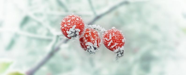 Hiberner ou hiverner ?